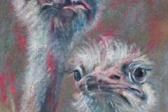 Vogel-Strauß-auf-Jute-50-x-70-cm